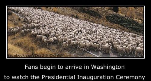 sheep_inauguration